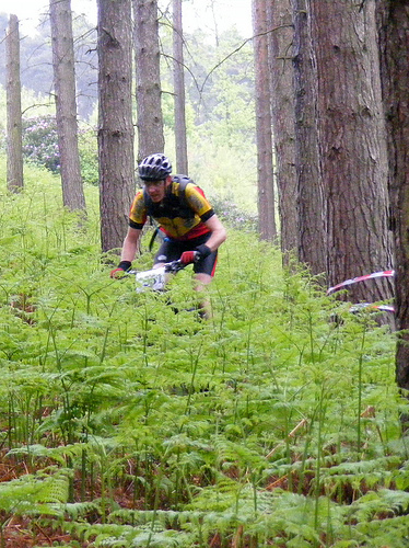 Through the Ferns at Cannock Chase
